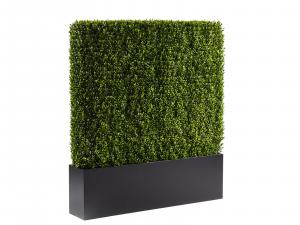 CEAC-003 | 4 ft Hedge