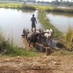 Myanmar_28